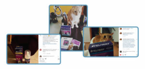 WOM word of mouth, +3k consumers recommended Feliway and +11k participated in a market research for the brand